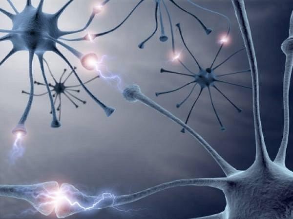 prenos impulsu v neuronech