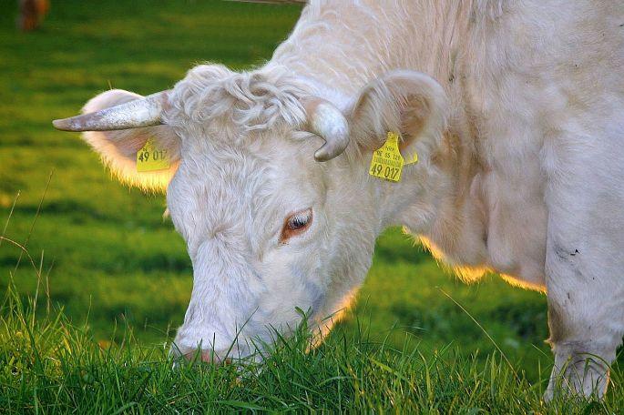 biomaso a ekologicke zemedelstvi