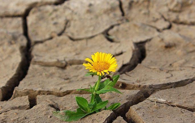 Vysušování půdy, nedostatek vody