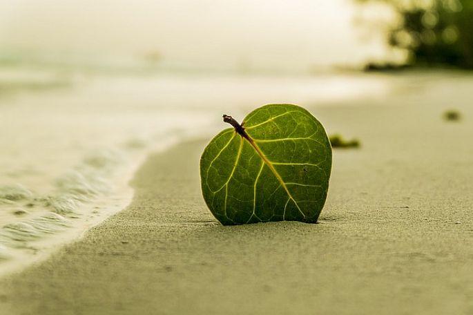 Zelený list v písku
